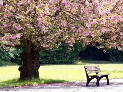 Bench under a tree with pretty flowers